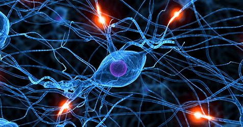 neuron-control-biology-practice