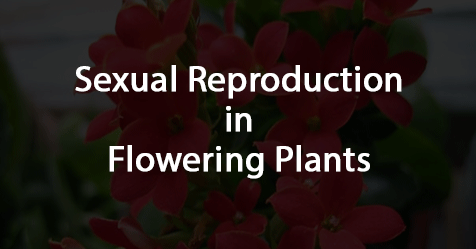 reproduction-plants-cbse-biology