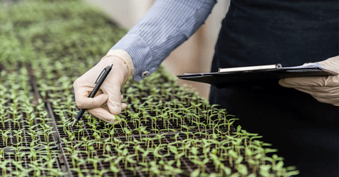 biotechnology-in-agricluture-cbse-class12
